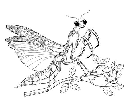 Mantis religiosa en negro sentado en la rama aislada.