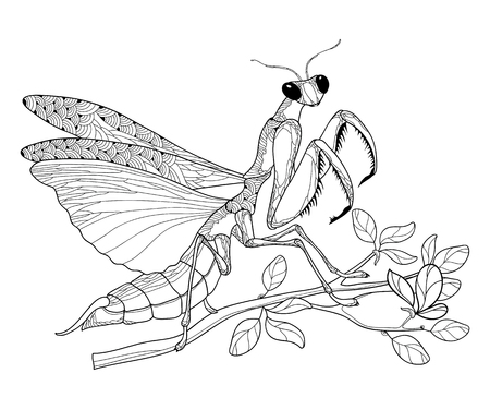 Praying Mantis en noir assis sur la branche isolée.