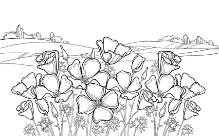 Landscape with California poppy for summer coloring book. Illustration