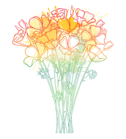 Bouquet with outline orange California poppy isolated.