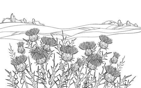 Dickichte der Umrissdistel oder Carduus-Pflanze in Schwarz. Vektorgrafik