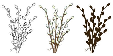 Ensemble de brindilles de saule bouquet isolés.
