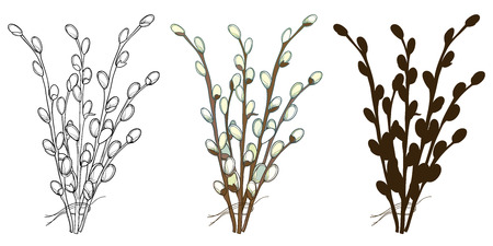 Set of bouquet Willow twigs isolated.