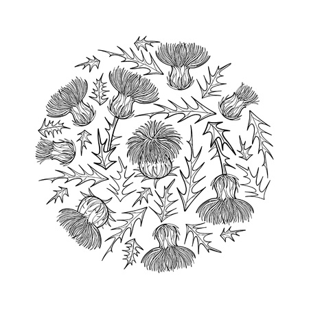Round bunch of Thistle or Carduus plant isolated. Иллюстрация