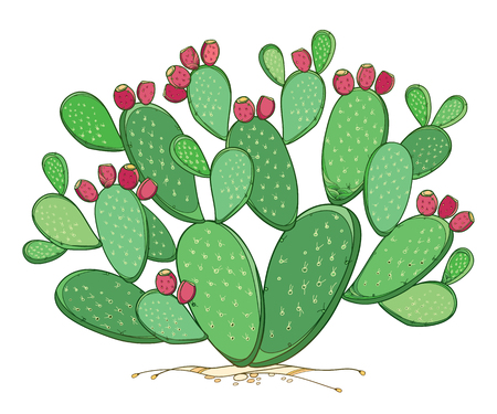 Bush of Opuntia plant or prickly pear cactus isolated. 版權商用圖片 - 122677267
