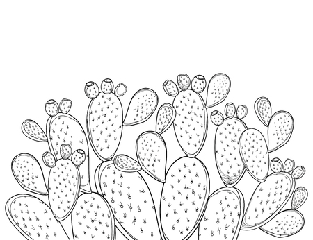Bush of Opuntia plant or prickly pear cactus isolated.