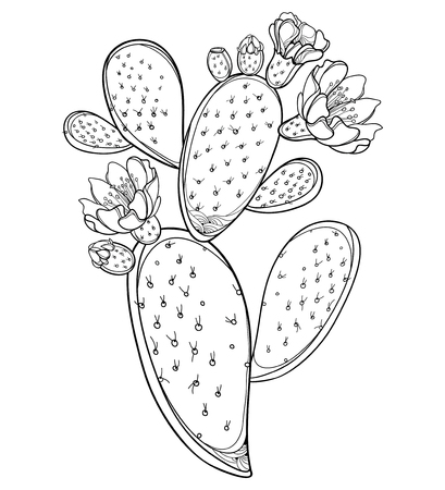 Stem of Opuntia or prickly pear cactus with flower isolated. Illustration
