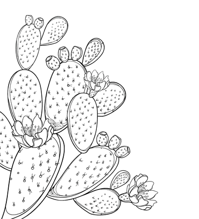 Narożnik kilka kaktusów opuncja lub opuncja na białym tle. Ilustracje wektorowe