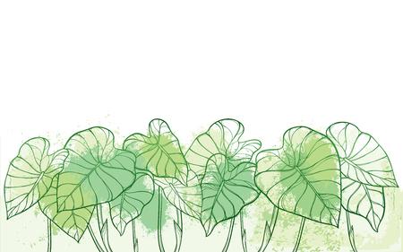 Colocasia tropical o hoja de Taro en verde pastel.