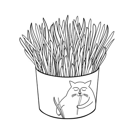 Cat grass for domestic pets in flowerpot isolated. Reklamní fotografie - 122679317