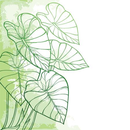 Narożny tropikalny liść Colocasia lub roślina Taro.