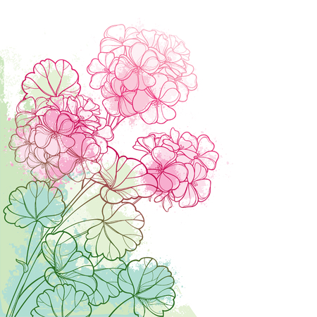Corner bouquet with pastel Geranium or Cranesbills flower. 向量圖像