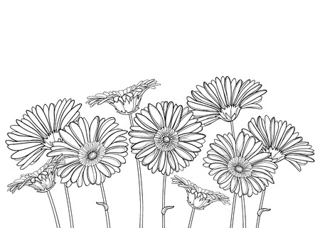 Bunch of outline Gerbera flower in black isolated.