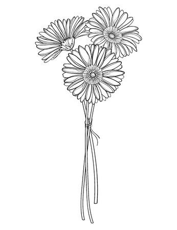 Bouquet of outline Gerbera flower in black isolated. 向量圖像