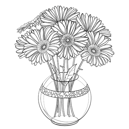 Bouquet of outline Gerbera flower in round vase isolated.