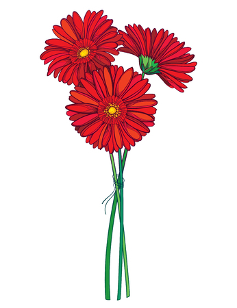 Bouquet of outline red Gerbera flower isolated.