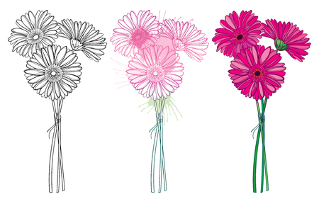 Set of bouquet outline Gerbera flower isolated.
