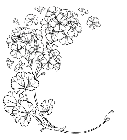 Corner bouquet of outline Geranium or Cranesbills flower.