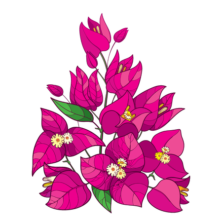 Outline Bougainvillea flower bouquet in pink isolated.