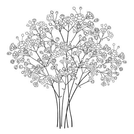 검은색 석고 또는 아기의 숨결이 있는 꽃다발.