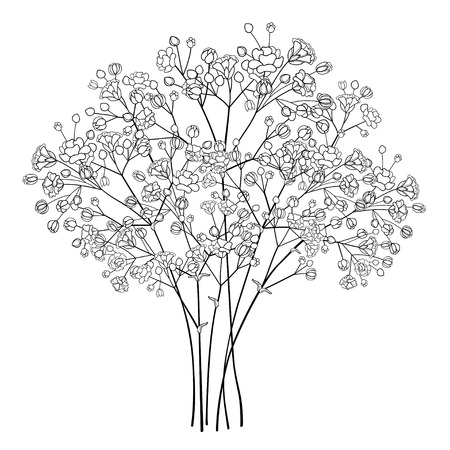 Bouquet with Gypsophila or Baby's breath in black. Illustration