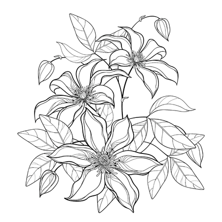 Bouquet with contour Clematis in black isolated. Illustration