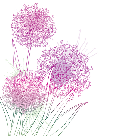 Bouquet of Allium or Giant onion flower isolated.