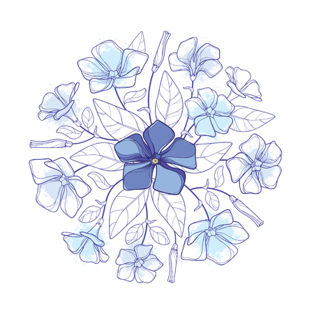 Round bouquet of blue Periwinkle or Vinca flower.