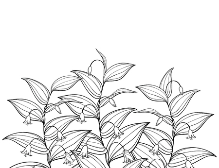 Bunch of Streptopus or rose twisted stalk isolated. Ilustração Vetorial