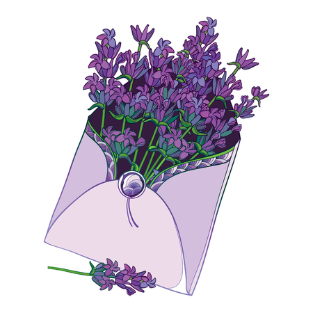 Bouquet with purple Lavender in open envelope isolated.