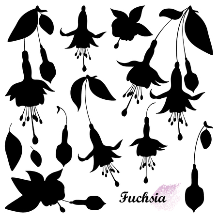 Set with silhouette of Fuchsia flower bunch isolated. 向量圖像