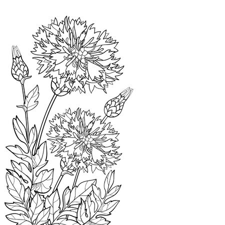 Corner bouquet of Centaurea or Persian cornflower.