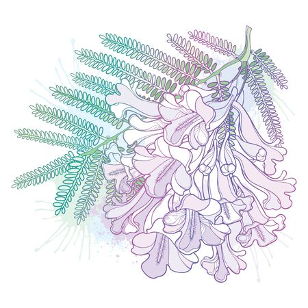 Branch of outline Jacaranda flower and leaf isolated. 向量圖像
