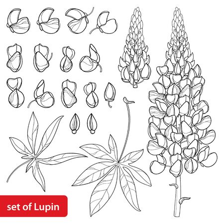 Set Lupine flower with bud and leaf isolated.