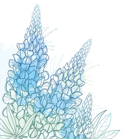 Corner bouquet of outline blue Lupine flower isolated.