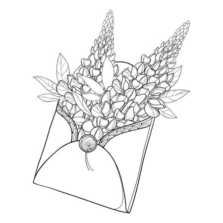 Bouquet of outline Lupin flowers in envelope isolated. Illustration