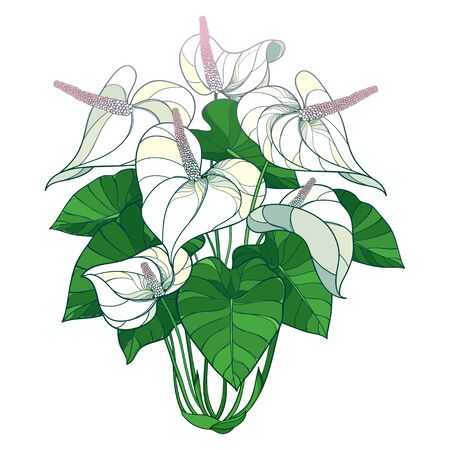 Bush of Anthurium flowers in pastel isolated.