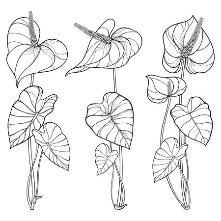 Set of Anthurium flower and leaf in black isolated.