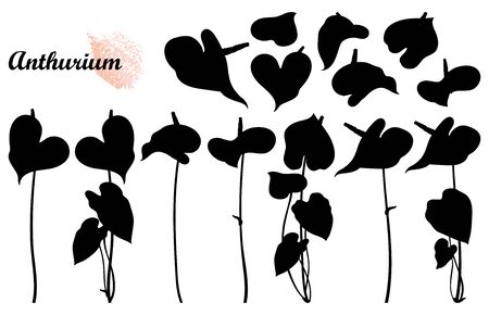 Set of Anthurium flowers silhouette in black isolated. Ilustrace