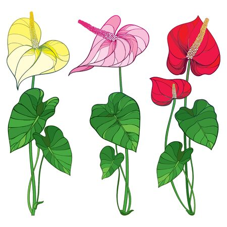 Set of Anthurium flowers and leaves isolated. Ilustrace