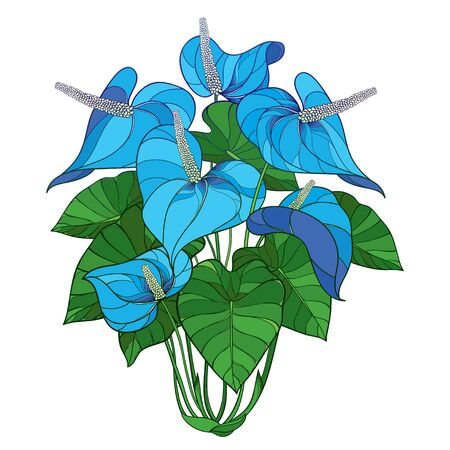 Tropical Anthurium blue flower and leaves isolated.
