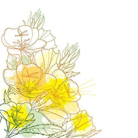 Corner bouquet of Oenothera or evening primrose.