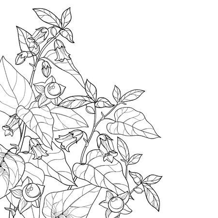 Corner Atropa belladonna or deadly nightshade isolated. Vecteurs