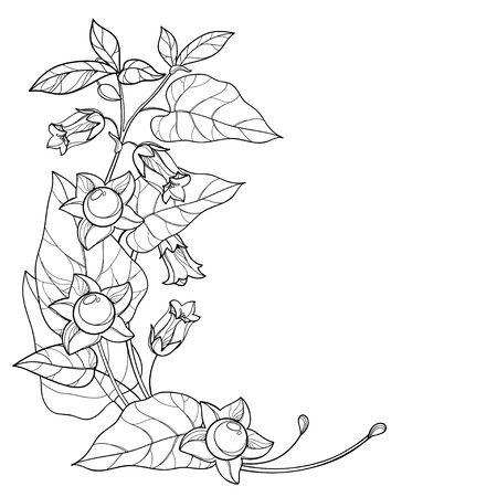 Contours Atropa belladonna ou morelle mortelle isolée. Vecteurs