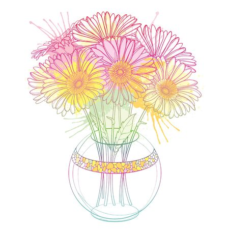 Bouquet of outline Gerbera in round vase isolated.