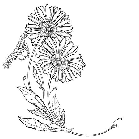 Corner bouquet of outline Gerbera flower isolated.