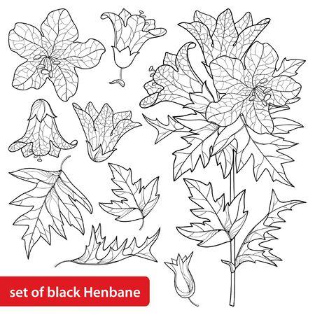 Set of Hyoscyamus or Henbane flower and leaf isolated.