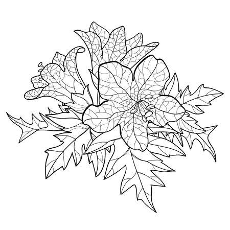 Outline Hyoscyamus or Henbane flower and leaf isolated.