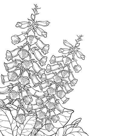 Outline corner bouquet of Digitalis or foxglove flower.