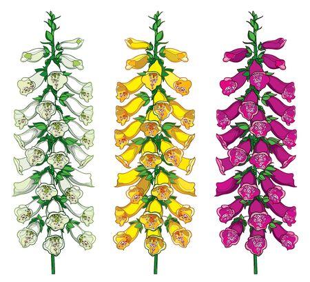 Outline toxic Digitalis or foxglove flower set.